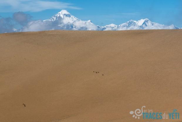 pop-b80/g-traversee.nepal.ya.ti.animaux.1.jpg