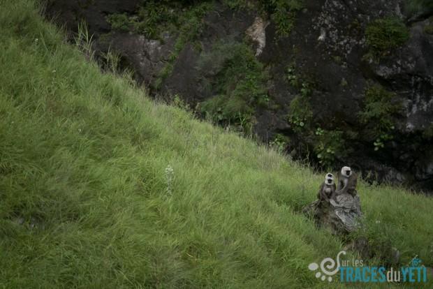pop-b80/g-traversee.nepal.ya.ti.animaux.3.jpg